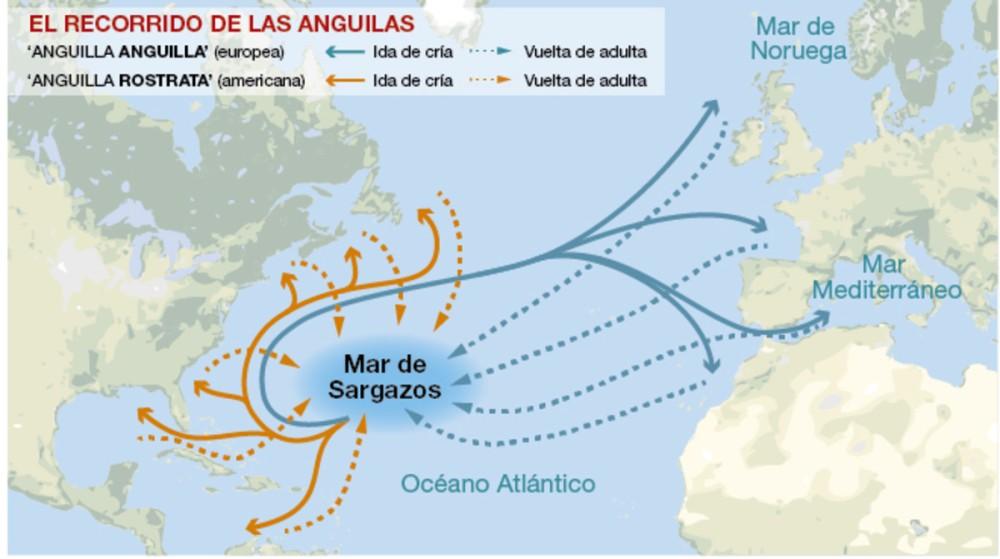grafico-del-recorrido-las-anguilas-1476645948171